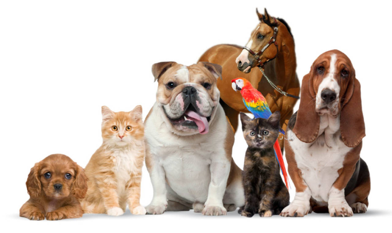 Trade Show | Veterinary Shows